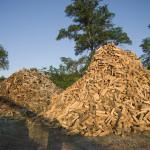 firewood_piles