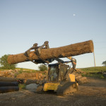 loader, sawmill, skid-steer, equipment, handling, lumber, logs