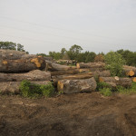 log_piles, sawmill, logs, Big Red